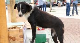 Beykoz'da Sokak Hayvanları Yuvasız Değil!..