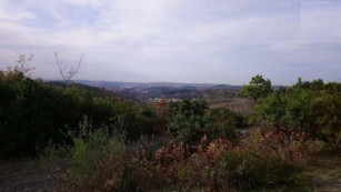 Beykoz'da özel ormana yapılacak 553 villa için ağaç kesme izni istendi