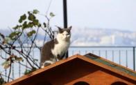 Beykoz Sokaklarına Sıcacık Kedi Evleri!..