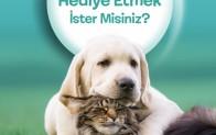 BEYKOZ'UN SEVİMLİ CAN DOSTLARI PROJESİ BAŞLADI!..