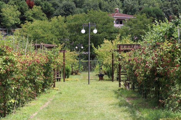Paşamandıra Meyve Bahçesi-2019 (3)