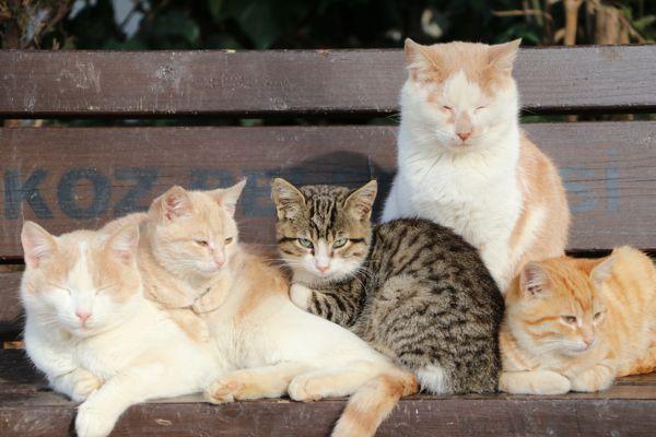 Kedi Evleri (6)