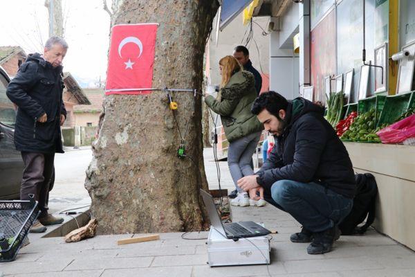 Anıt Ağaç Ölçüm Çalışmaları (3)