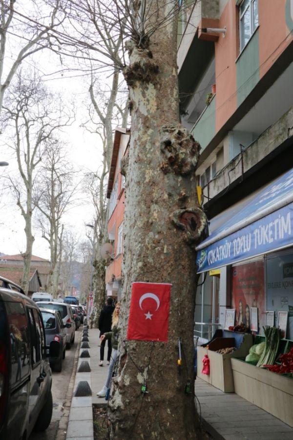 Anıt Ağaç Ölçüm Çalışmaları (4)