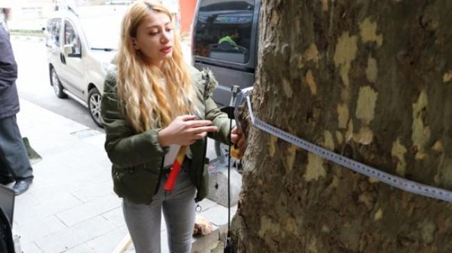 Anıt Ağaçlar Sağlık Taramasından Geçiyor!..