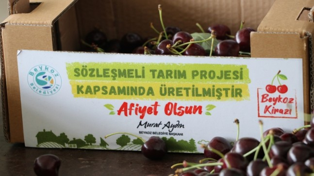 BEYKOZ'DA DEV TARIM ATAĞI!..